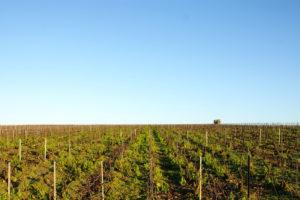 Die Weinberge der Champagne