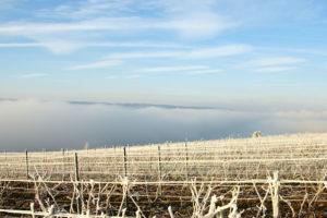 Die Weinberge der Champagne im Winter